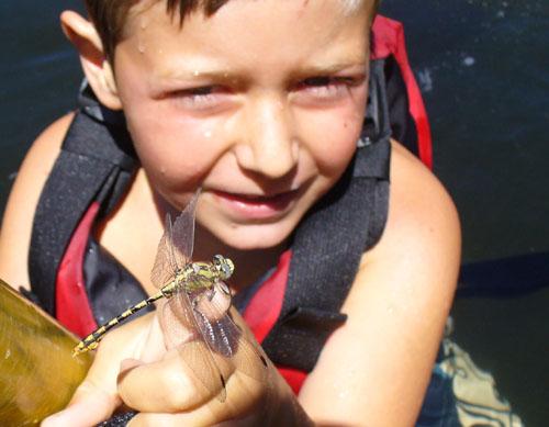 klamatgh river dragonfly